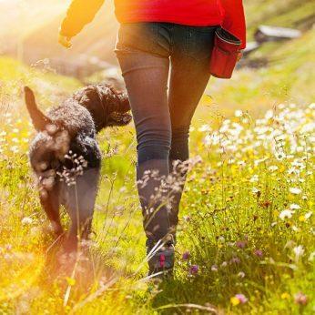 Nustebsite, kokią naudą jūsų širdžiai turi šunys