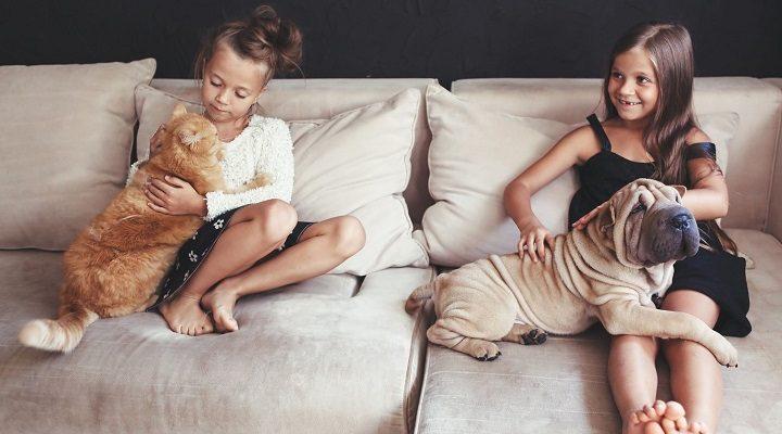 Pagaliau paaiškėjo, kas labiau myli žmones – katės ar šunys