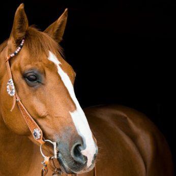 Pokalbiai su žirgais: ar tikrai pažįstame šiuos gyvūnus?