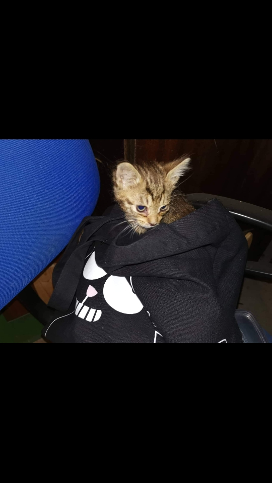 Skubiai ieškoma globa mažam kačiukui Vilniuje