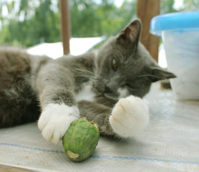 visa tiesa apie kates ir agurkus