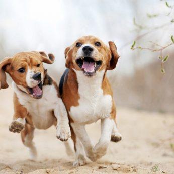 20 įdomiausių faktų apie šunis