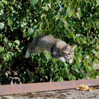 Ar katė gali turėti sparnus