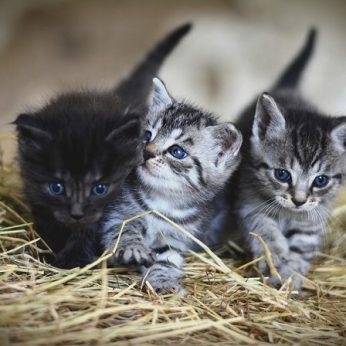 Augintinis: katytė ar katinas