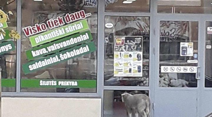 Gyvūnų diena Šilutėje: prie parduotuvės tokio svečio sutikti nesitikėjo