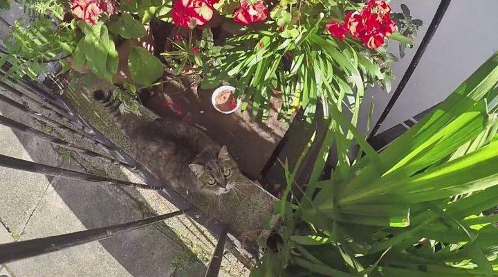 Ištikima katė laukė šeimininko dienų dienas, nesuprasdama, kad jis niekada nebepasirodys