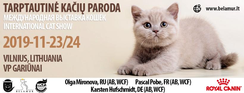 International Belamur cat show Tarptautinė kačių paroda