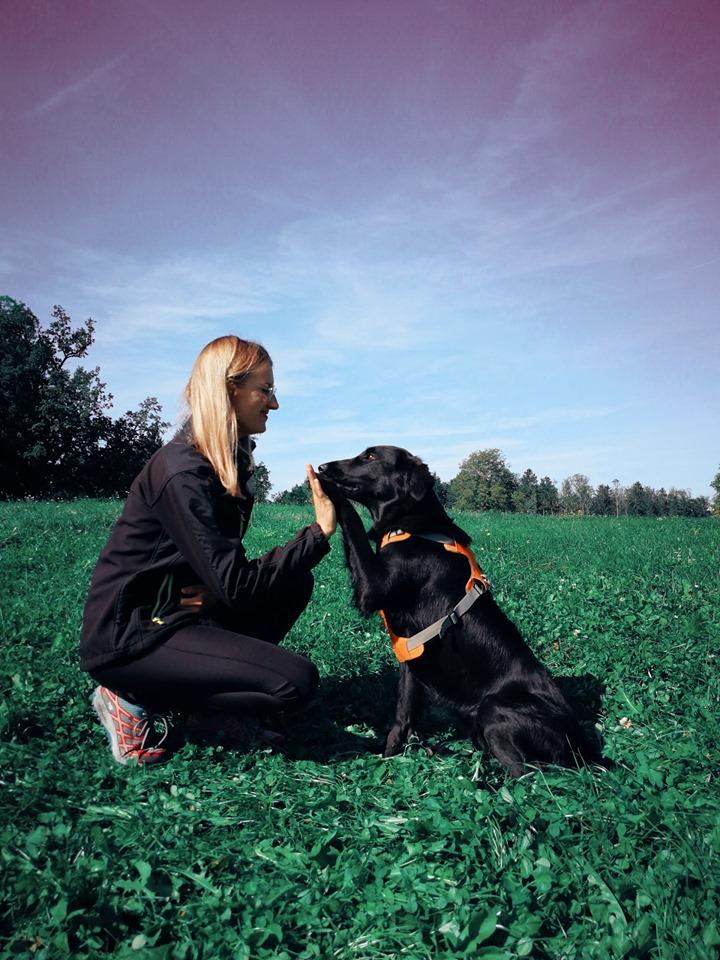 Jaunų šuniukų socializacija, pirmosios paklusnumo pamokos