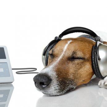 Kaip muzika veikia šunis?