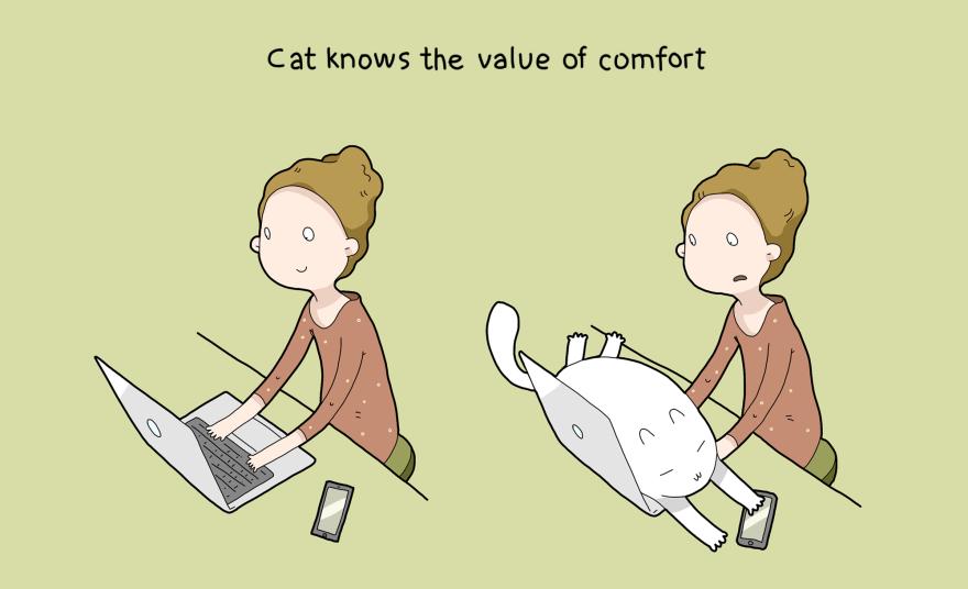 Katė žino, kaip reikia patogiai gyventi.