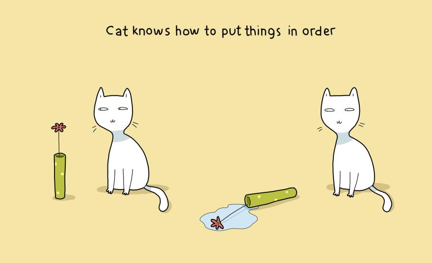 Katė žino, kaip viską sutvarkyti.