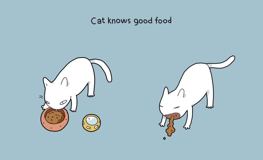 Katė žino, kas yra geras maistas
