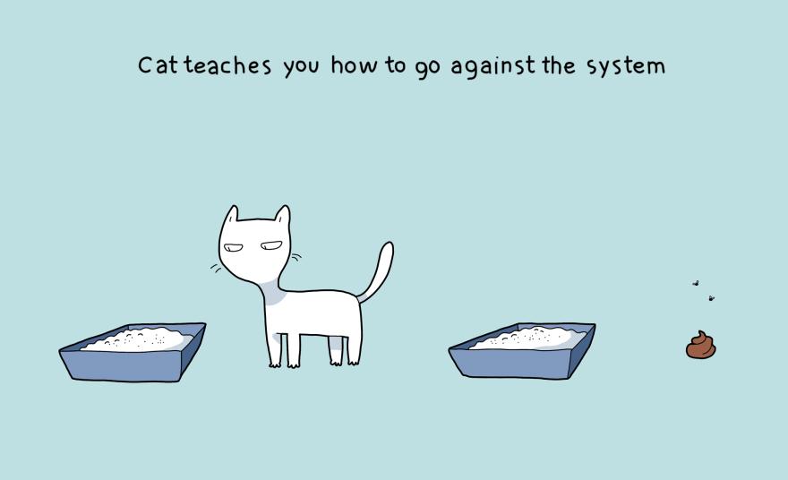 Katė taip pat išmoko būti išskirtiniu.