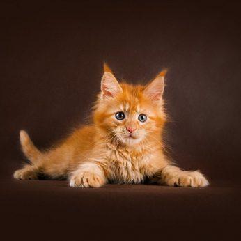 Pasiėmę mažą kačiuką net nesitikėjo to, kas išaugo: tapo pasaulio rekordu