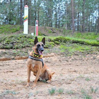 Pasienyje sulaikytos rusės su 10 šunų atskleidė opią bėdą