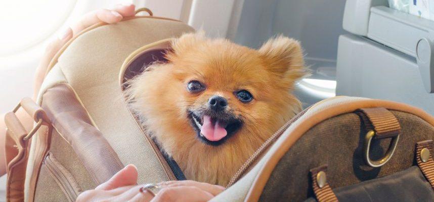 Patarimai kelionių ir gyvūnų mylėtojams: kaip pasiruošti skrydžiui lėktuvu drauge su augintiniu?
