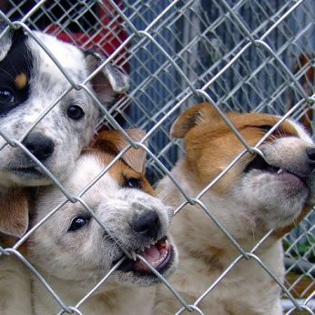 Perpildytų gyvūnų prieglaudų problemą kuriame patys