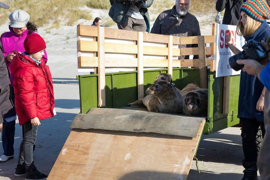 Ruoniukai paleidžiami į laisvę Baltijos jūroje. A. Mažūno nuotr.