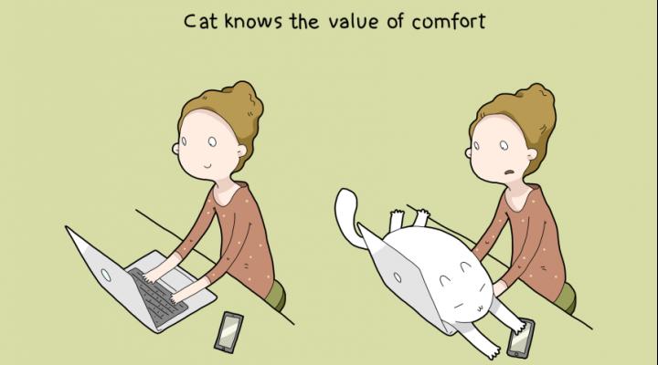 Top 10: kodėl gerai turėti katę