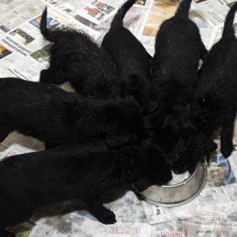 Anykštėnas įdavė draugę šiurpiai nugalabijo 4 mažylius