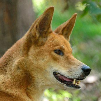 Apleistas šuo slėpė didžiulę paslaptį: keturkojis virto pasauline sensacija