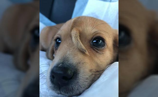 Išmestas šunytis tapo pasauline sensacija: pribloškė neįprasta išvaizda
