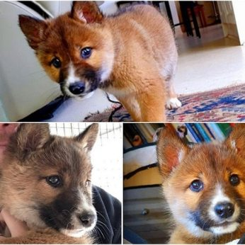 Kieme rado mielą šuniuką – pasirodė, iš tiesų tai visai kitas ir itin retas gyvūnas