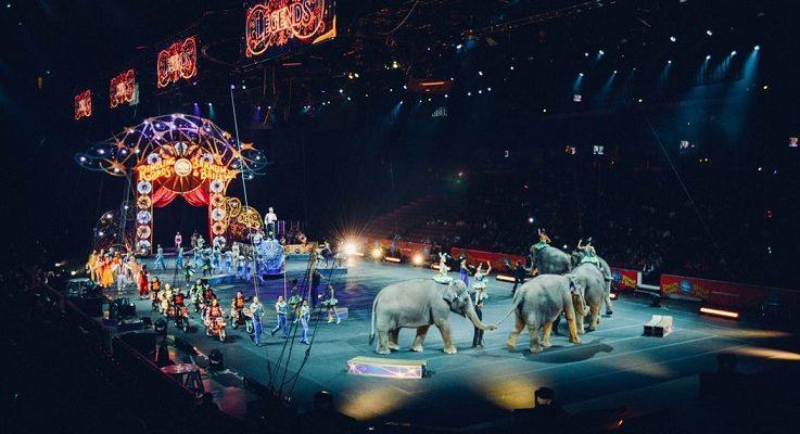 Laukinių gyvūnų naudojimas cirkuose – nauji įstatymai JAV