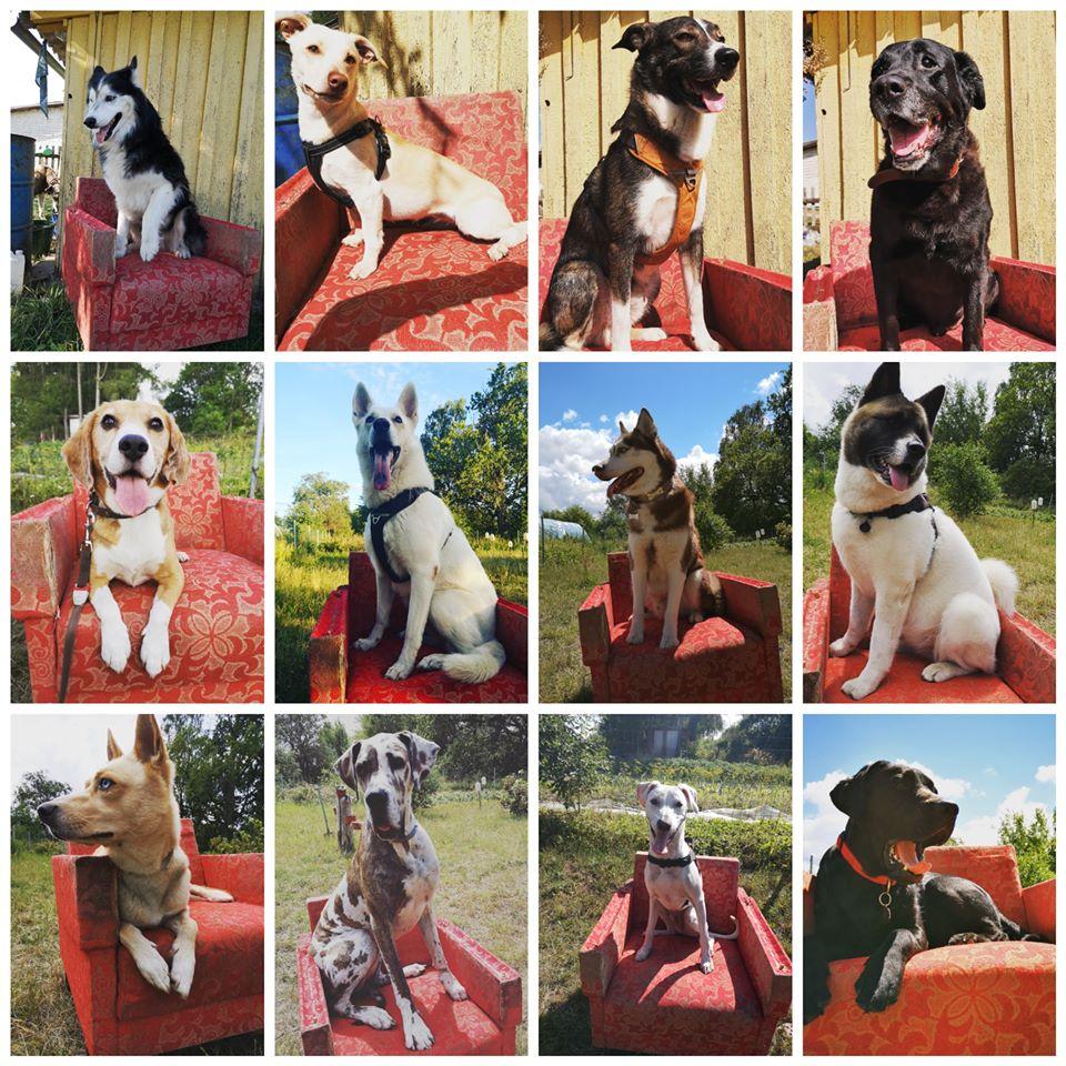 LovelyBark-tai naminių gyvūnėlių priežiūros namai. Pas mus jūsų augintinis turės linksmiausias ir smagiausias atostogas bei kitu draugiškų šunų kompaniją.