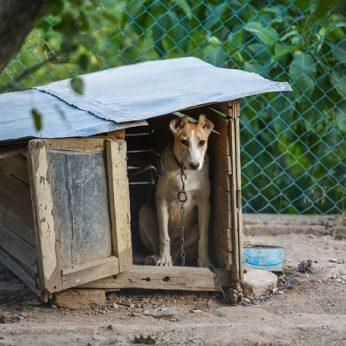 Nepriežiūros atvejis Palangoje: nuolat kaukiantis šuo voljere