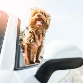 PETICIJA Už galimybę vežtis šunis viešuoju transportu ne taroje