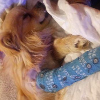 Piktas kaimynas ginklu visam gyvenimui sužalojo šunį: atomazga paliko be žado