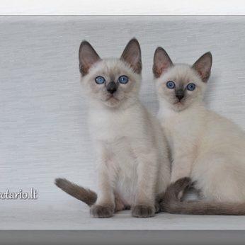 NECTARIO*LT – Tailando kačių veislynas