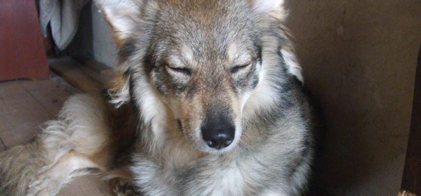 Skaitytojai rašo: šunų mylėtojo pasiaiškinimas pareigūnei