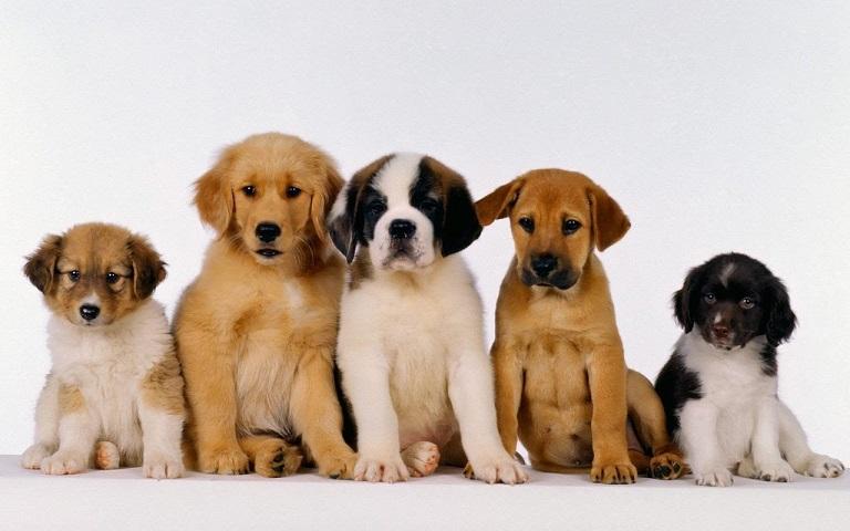 Sveiko šuns auginimo pagrindai