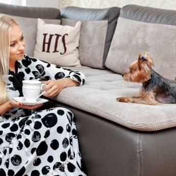 Tauragiškės šunį ištiko tragedija veterinaras atvejį vadina tikru stebuklu