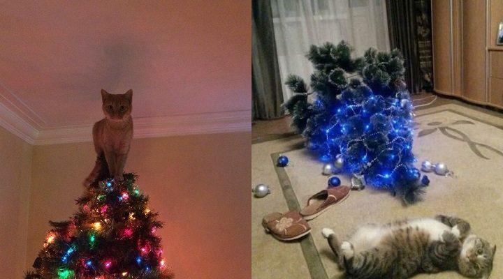 Amžina kačių kova su kalėdinėmis eglutėmis vaizdeliai priverčia ir juoktis, ir siusti
