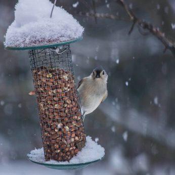 Ar lesinti paukščius bet kur – leistina?
