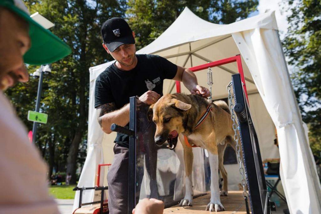 Naujos galimybės mūsų augintiniams – pirmasis sporto klubas šunims Lietuvoje