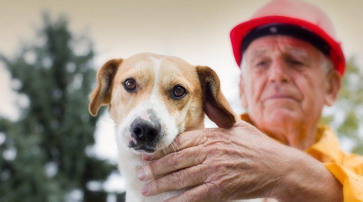 Palikę šunį vieną to nesitikėjo: vos išvengė tragedijos, perspėja visus
