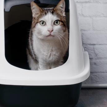 Patarimai kaip išsirinkti geriausią kraiką katei