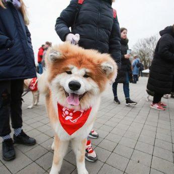 Šunų mylėtojai kauniečius nustebino įspūdingu reginiu