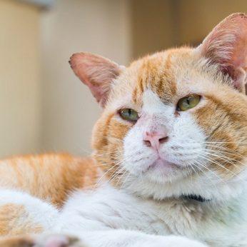 14 metų nežinia kur klajojęs katinas grįžo pas šeimininkus nugaišti