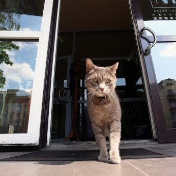 Apie katę užklupusį vėžį išduoda keli požymiai patarė, kaip atpažinti