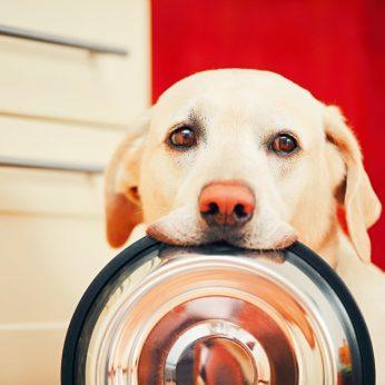 Ar šunys yra savanaudžiai?