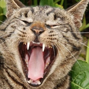 Ar katė jus suėstų, jei mirtumėte O gal katės nemėgsta žmogienos