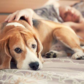 Dalis alergiškų šunims žmonių gali auginti bet kokios veislės keturkojį su viena išlyga