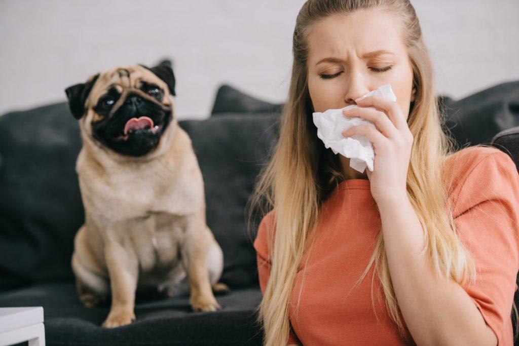 Dalis alergiškų šunims žmonių, pasirodo, gali turėti bet kurios veislės gyvūną, su sąlyga, kad tai bus patelė arba kastruotas patinėlis. 123rf nuotr.