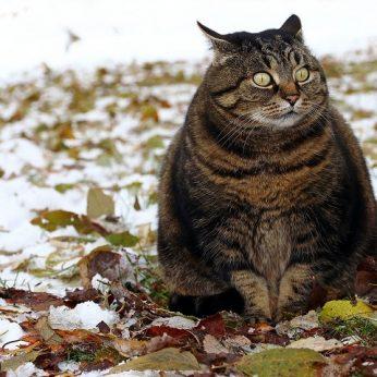 Jei jūsų katė niekada neišeina į lauką, privalote tai perskaityti