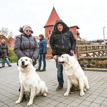 Lenkų tautos simboliu tapę šunys stebina pakaunės gyventojus